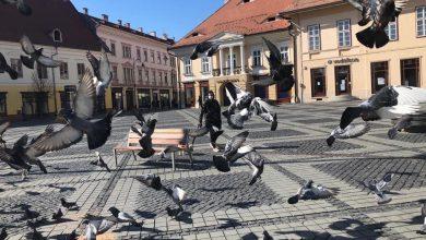"""Photo of Porumbeii, singurii """"turiști"""" din Piața Mare, în vreme de pandemie"""
