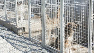 Photo of În Sibiu, a crescut numărul de animale de companie adoptate. Crește și responsabilitatea față de ele?