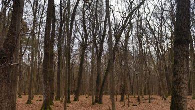 Photo of Beneficiile unei băi în pădure