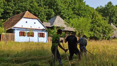 Photo of La cosit fâneața, în Muzeul ASTRA. După muncă, clăcașii și-au primit răsplata: slană cu ceapă