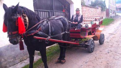 """Photo of Singurul """"taxi"""" din Tălmăcel are patru picioare și un cal putere. Pe deasupra e și eco"""